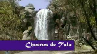 Tala Jalisco Vive