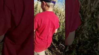 Lost In The Corn Maze