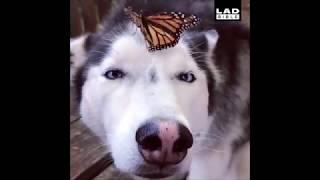 Funny Dog Videos 2018 Compilation 1