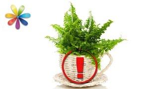 Какие комнатные растения вызывают головную боль и бессонницу? – Все буде добре. Выпуск 893от10.10.16