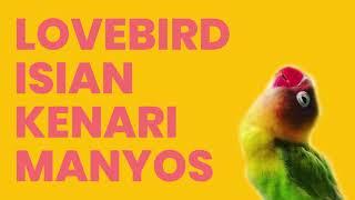 Download Mp3 Masteran Suara Lovebird Rasa Kenari, Amazing!