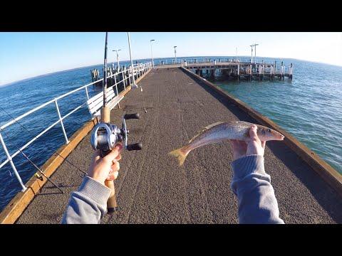 Multi-Species Jetty Fishing Challenge