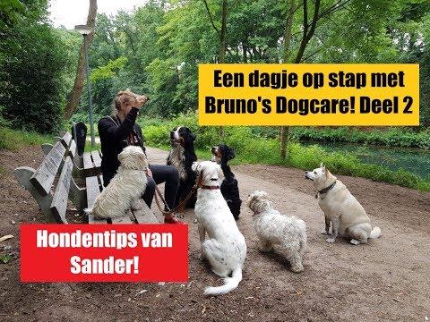 """Verbeterde versie van """"Een dagje op stap met Bruno's Dogcare! Deel 2!"""" # Vlog 16"""