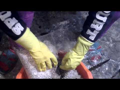 выращивание мицелия для вешенки