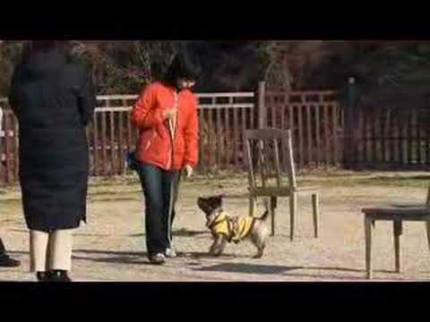 Turid Rugaas - What do I do when my dog pulls - DVD Trailer