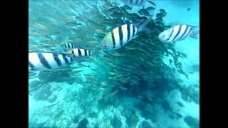 セブ島3日目はシャングリラホテルビーチ沖でシュノーケル MYホテル、EGI...