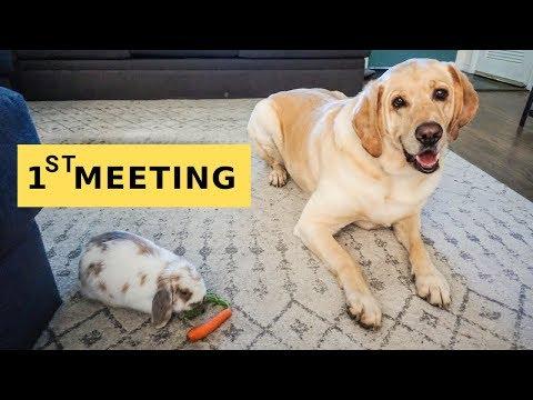 DOG meets cousin BUNNY & CAT