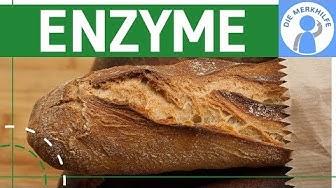 Enzyme als Biokatalysatoren einfach erklärt - Was sind Enzyme? Enzymaktivität - Stoffwechselbiologie