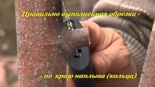Обрезка весенняя. Часть 2(Весенняя обрезка, да и вообще любая обрезка - дело важное. Насколько важно правильно обрезать деревья вы..., 2012-08-26T14:56:41.000Z)