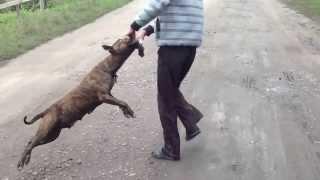 Собака-вертолёт