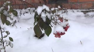 Зима на даче, Каннальярви, Ленинградская обл.