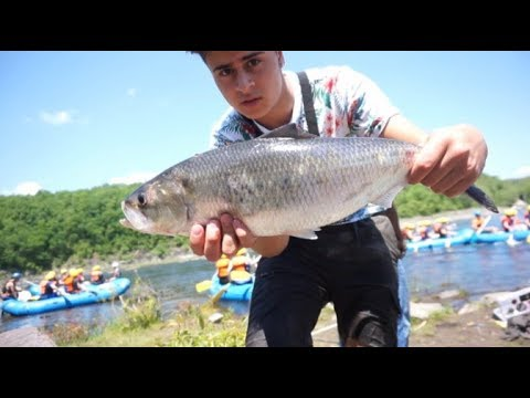 Fishing For BIG Shad, Walleye And Smallmouth On The Connecticut River