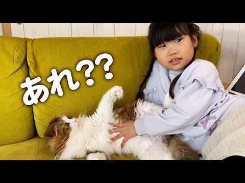大好きな娘がアニメに夢中になった時の猫の反応は?
