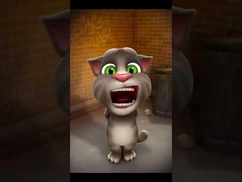 Mèo Tom hát – quả gì Bài hát thiếu nhi hay nhất