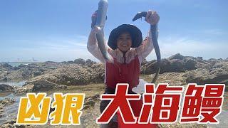 【English sub】小章外出赶海,偶遇两只凶猛海鳗,还差点让它给跑了!【赶海小章】