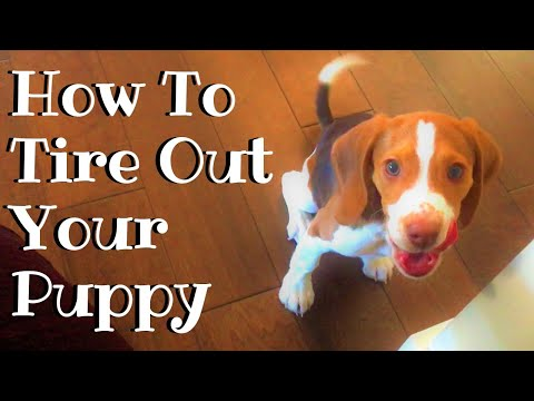 How To Tire Out Your Puppy