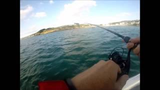 pêche BARS, FINISTERE, DOUARNENEZ, NO KILL