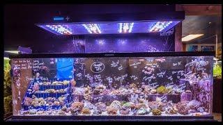 Aquatic Start Visits Nahacky's Aquarium In Melbourne Fl
