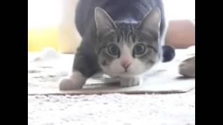 кот танцует под вигл вигл
