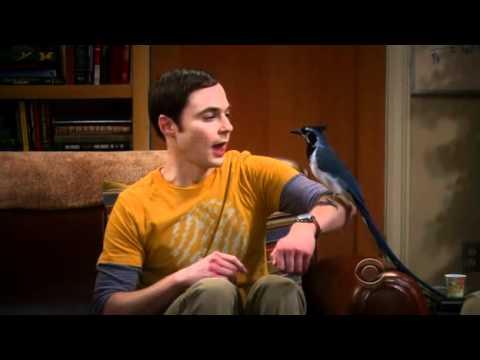"TBBT - Season 5 Episode 9 - Sheldon's ""Lovie Dovie"""