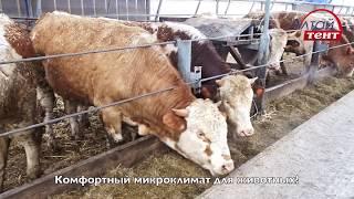 ФЕРМА КРС Коровники беспривязного содержания, откорм бычков, строительство коровников, молочных ферм