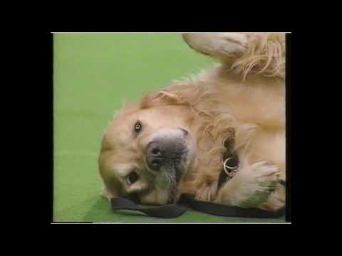 Crufts 1993 -  the groups