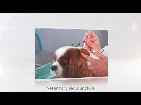 Veterinarians In MA Using Acupuncture Homeopathy and Herbal Therapy