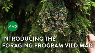 Introducing the Foraging Program VILD MAD/Wild Food