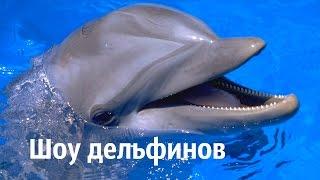 Шоу дельфинов. Зрители облиты водой.