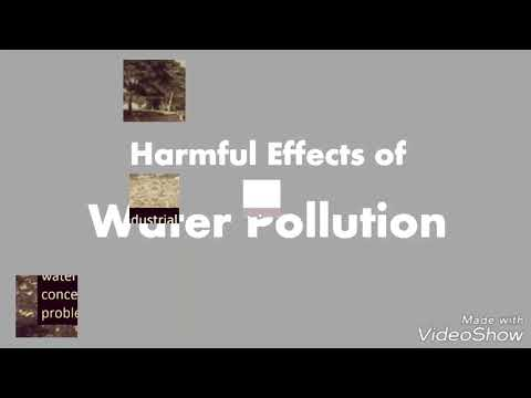 Harmful Effects of Water Pollution - Bangalore City