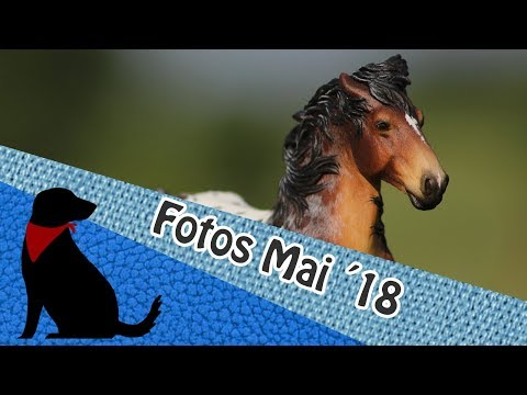 FOTOS MAI 2018 - Bravedog_Customs