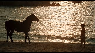 Caleb Deschanel on Filming THE BLACK STALLION