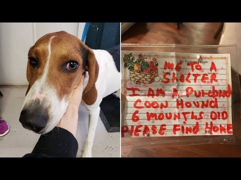 This Puppy Was Found Alone And Confused  Then Rescuers Discovered The Note On Her Collar