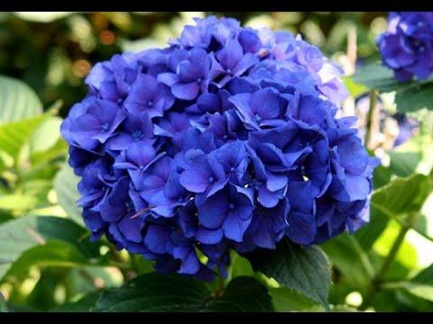 Bunga Termahal - ini Adalah 10 Bunga Termahal di Dunia - YouTube 29f9dc90b8