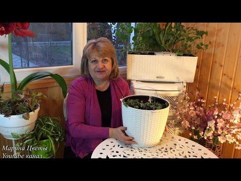 Гидрогель для растений видео инструкция / hydrogel for flowersиз YouTube · С высокой четкостью · Длительность: 4 мин16 с  · Просмотры: более 7.000 · отправлено: 10.02.2015 · кем отправлено: Диануля