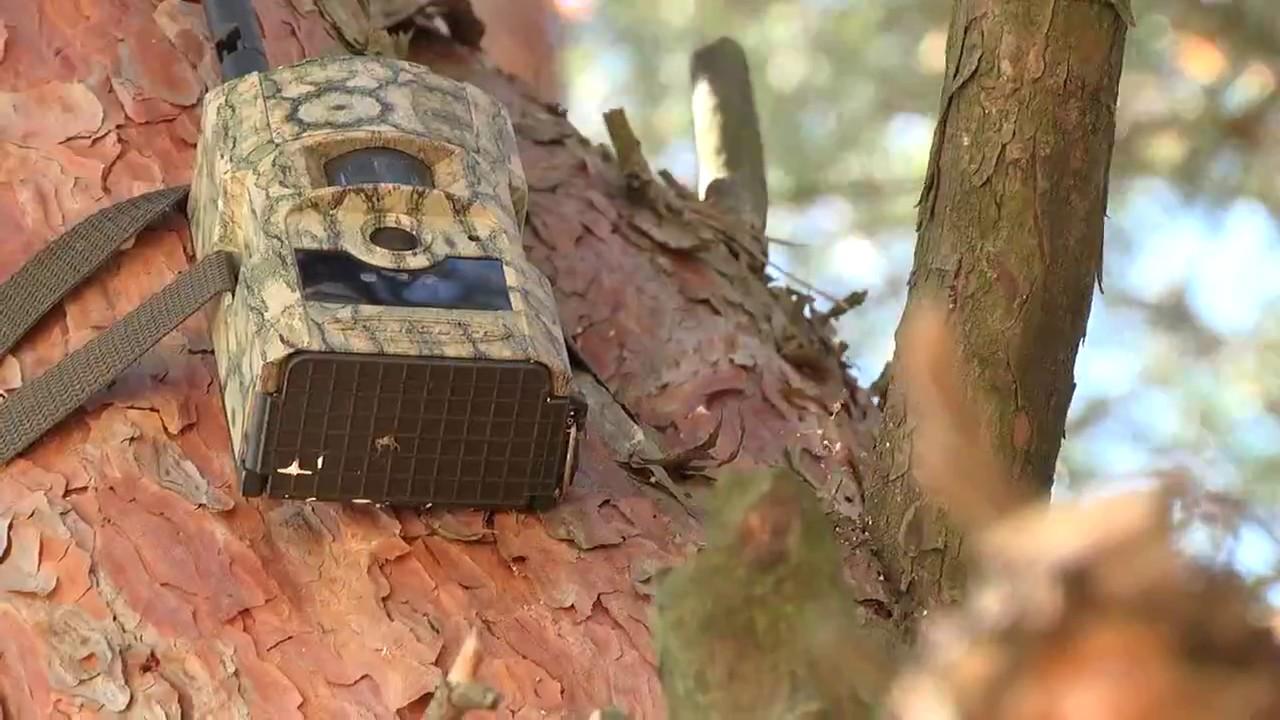 как вычислить фотоловушку в лесу ароматерапии активно используется