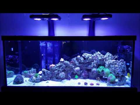 75g Mixed Reef Light Upgrade:  Kessils to Radions