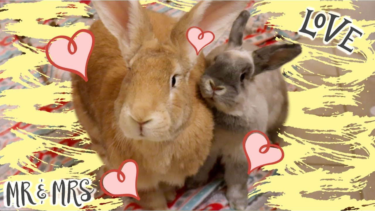 i-got-another-rabbit-bunny-bonding-w-desmond-olive
