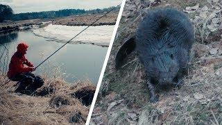 Рибалка і ВЕЛИЧЕЗНИЙ БОБЕР! Ловля навесні на поплавок на малій річці
