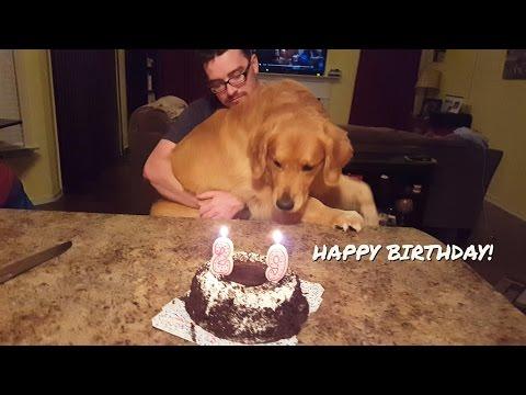 Oshie The Golden Retriever Celebrates Dad's Birthday!