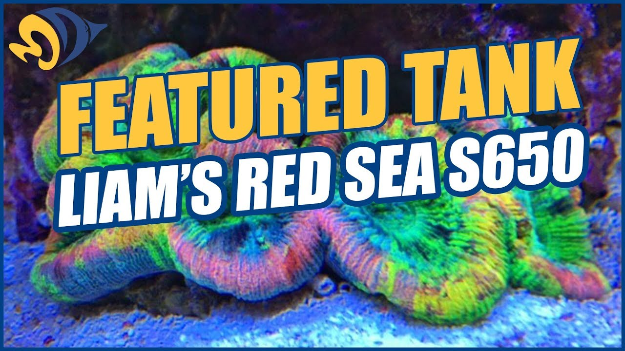 Liam's (aka Lovatt) Red Sea Max S-650 Mixed Reef Aquarium - A NEW Featured Tank from the UK! Thumbnail