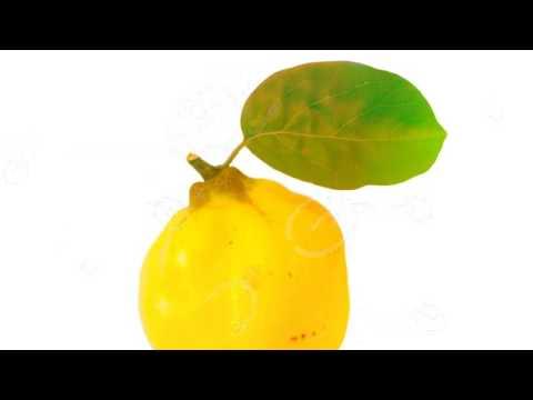 Айва. Полезные свойства айвы. Листья айвы. Секреты айвы