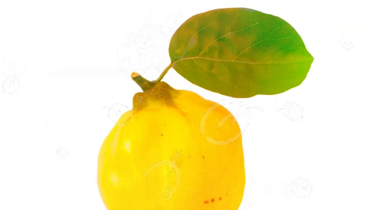 Лечебные свойства айва листья и диабет