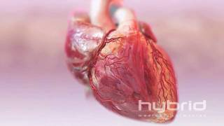 hybrid heart with blood flow HD