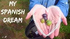 Dreams come true when olive picking!