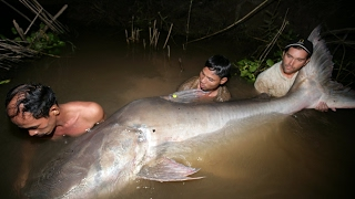 Video Incredible 300 Kg Fishing Monster Catfish In Mekong Thailand download MP3, 3GP, MP4, WEBM, AVI, FLV Juli 2018