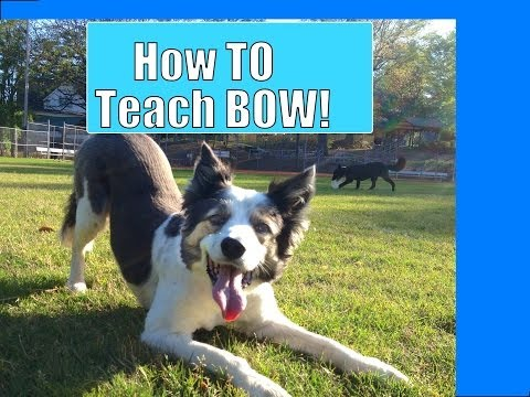 Take a Bow (How to teach your dog to bow)