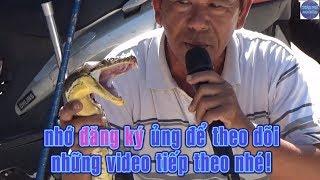 Con nưa 9 lỗ mũi và những màn ảo thuật không thể tin nổi/poison snake in vietnam