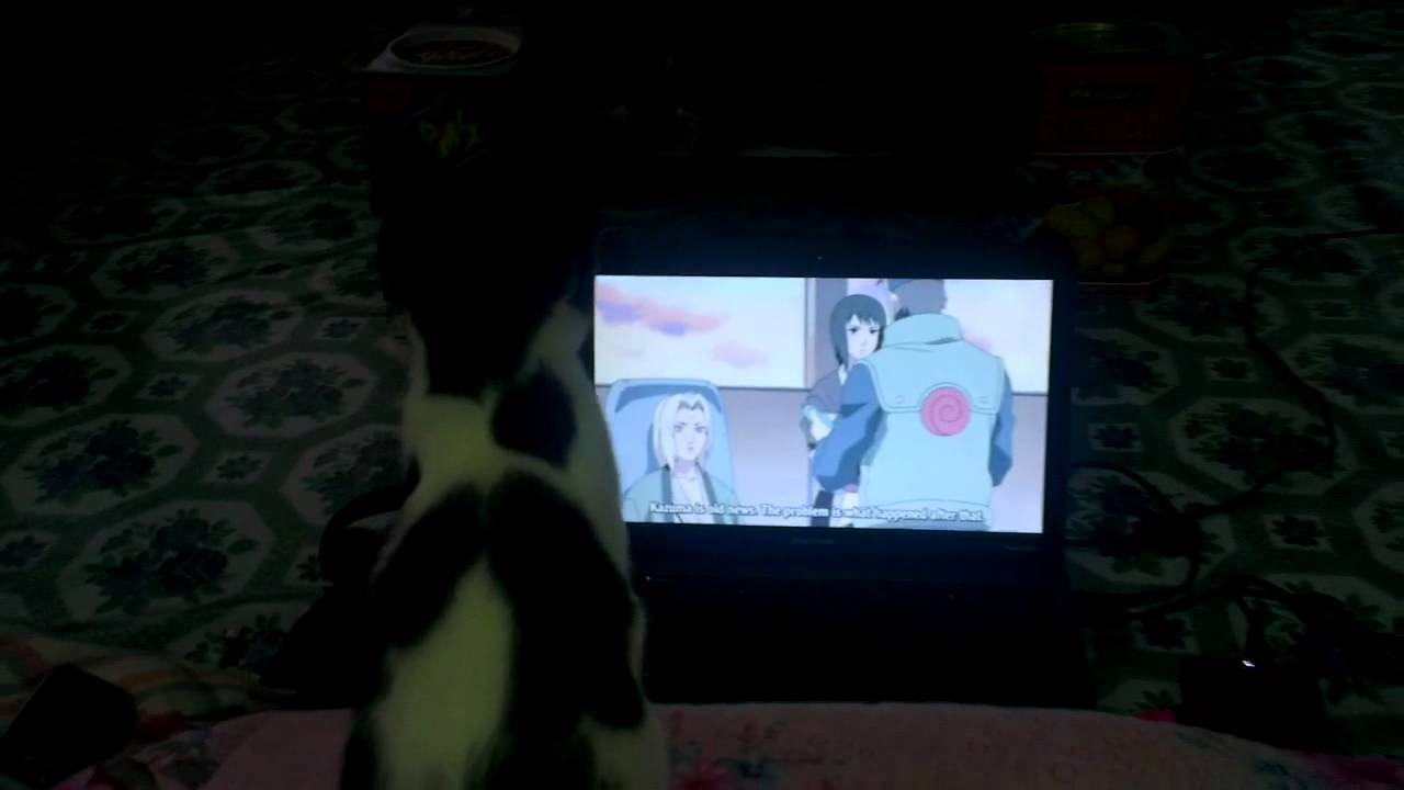 my cat watching naruto anime youtube