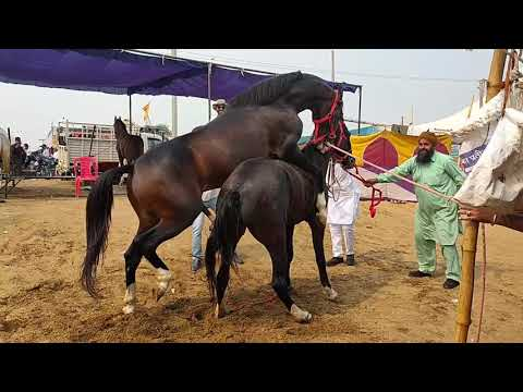 Girl and Horse - Great Bond - the original video from YouTube · Duration:  43 seconds